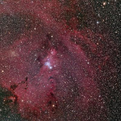 NGC 2264, the Cone and Christmas Tree Nebula-Stocktrek Images-Photographic Print