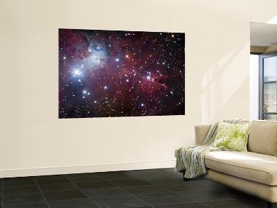 NGC 2264, the Cone Nebula Region--Wall Mural