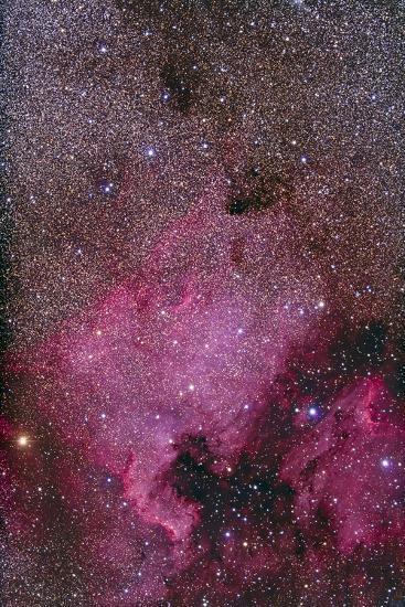 Ngc 7000 and the Pelican Nebula--Photographic Print