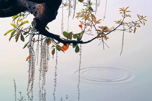 Hanoi Water Ripple by Nhiem Hoang The