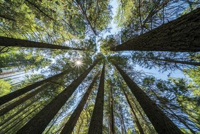 Spectacular Sequoias