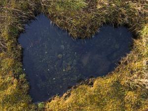 Heart-Shaped Pool on Saltmarsh, Argyll, Scotland, UK, November 2007 by Niall Benvie