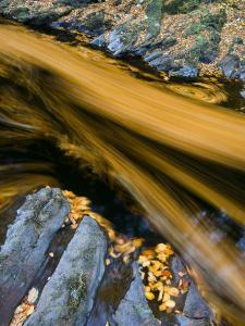River North Esk Loaded with Beech Leaves, Angus, Scotland, UK, October 2007 by Niall Benvie