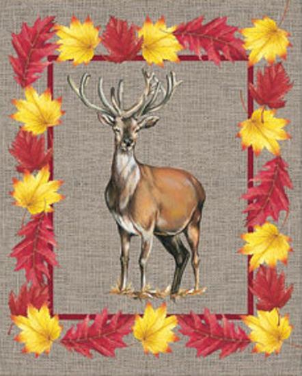 Nice Animals Deer--Art Print