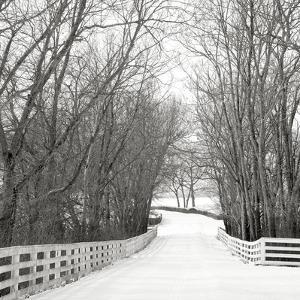 Country Lane in Winter by Nicholas Bell