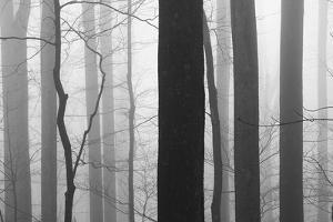 Forest Code by Nicholas Bell