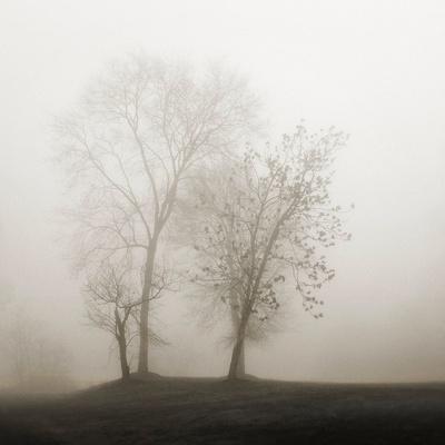 Four Trees in Fog