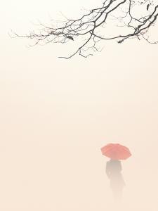 In Autumn Fog by Nicholas Bell