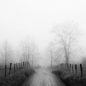 Sparks Lane in Fog by Nicholas Bell