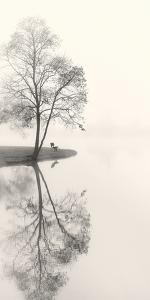 Tranquil Morning by Nicholas Bell