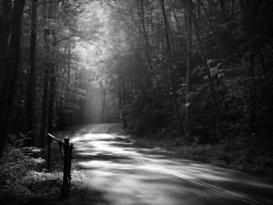 Tremont Road, Smoky Mountains by Nicholas Bell