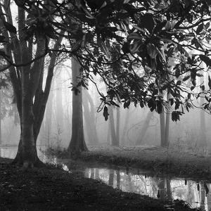 Woodland No. 1 by Nicholas Bell