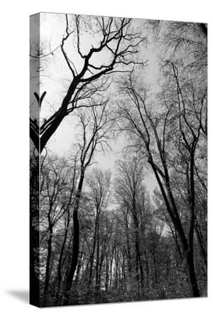 Forrest and the Sky, Black & White