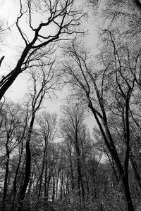 Forrest and the Sky, Black & White by Nicholas Campbell