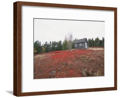 A Blueberry Field with a Tiny House Along Maines Route One
