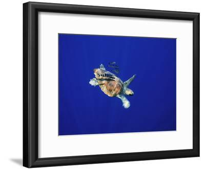 A Swimming Sea Turtle Flanked by Fish