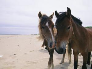 Two Curious Wild Horses on the Beach by Nick Caloyianis