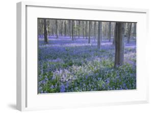 Bluebell Dreams I by Nick Dautlich
