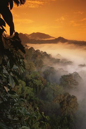 RF- Sunrise and mist over lowland dipterocarp rainforest. Danum valley, Sabah, Borneo, Malaysia