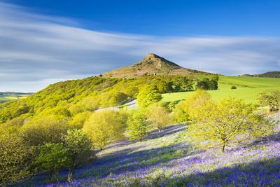 United Kingdom, England, North Yorkshire, Great Ayton. Spring Bluebells at Roseberry Topping.