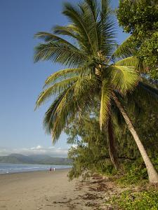Four Mile Beach with Coconut Palm Trees, Port Douglas, Queensland, Australia, Pacific by Nick Servian