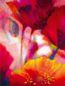 Amid Poppies II by Nick Vivian