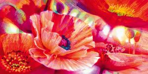 Poppy Homage by Nick Vivian