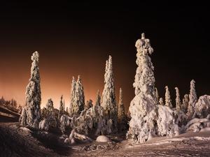 Orange Finnish Winter Forest by Nickolay Loginov