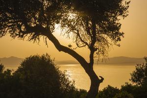 Lake Ichkeul, National Park of Ichkeul, Bizerte Province, Tunisia, North Africa by Nico Tondini