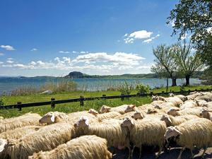 Lake of Bolsena, View from San Magno Area, Viterbo, Latium, Italy by Nico Tondini