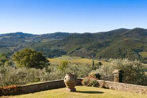 Olive Groves, Greve in Chianti, Chianti, Florence Province, Tuscany, Italy by Nico Tondini