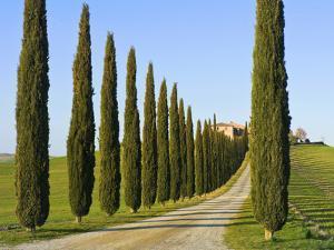 Val D'Orcia, Siena Province, Siena, Tuscany, Italy by Nico Tondini