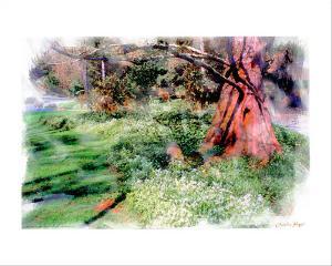 Under the Tree by Nicolas Hugo