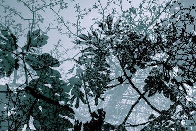 Végétaux 17, c.2008