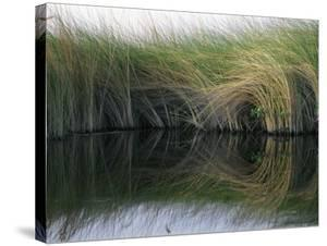 Aquatic Grasses Blow in the Wind by Nicole Duplaix