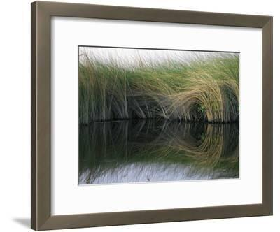 Aquatic Grasses Blow in the Wind