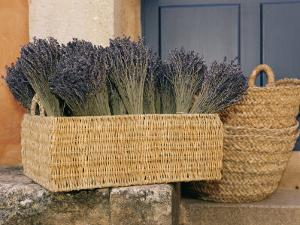 Basket Full of Herbs by Nicole Duplaix