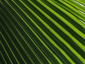 Close View of a Palm Plant by Nicole Duplaix