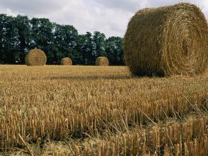 Haystacks in a Field in Normandy by Nicole Duplaix