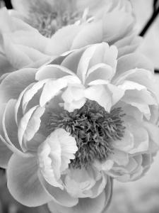 Delicate Blossom III by Nicole Katano