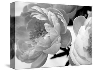 Delicate Blossom by Nicole Katano