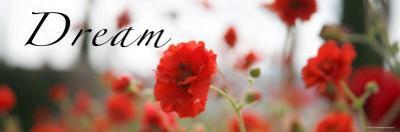 Dream Flowers III by Nicole Katano