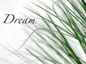 Dream: Reeds by Nicole Katano