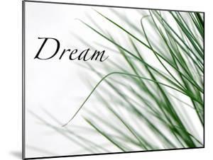 Dream: Reeds by Nicole Katano