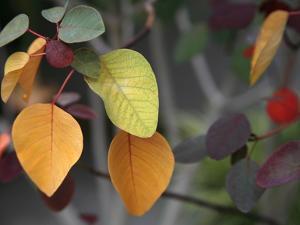 Fall Leaf Bouquet by Nicole Katano