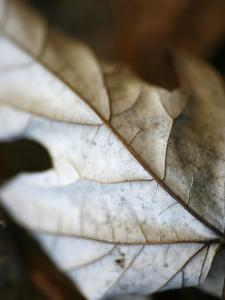 Fallen Leaves I by Nicole Katano