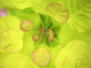 Fresh Bloom II by Nicole Katano