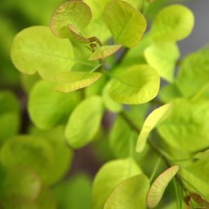 Fresh Bloom III by Nicole Katano