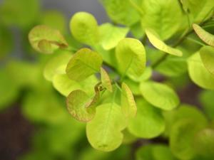 Fresh Bloom IV by Nicole Katano