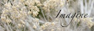Imagine: Flowering Meadow by Nicole Katano